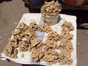 Tubercules de gingembre vendus au marché de Brazzaville.