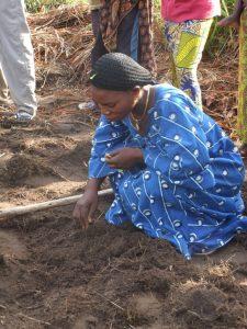 Préparation du sol pour les semis